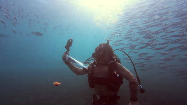 feeling free among the fish - circular strobe stock videos and b-roll footage