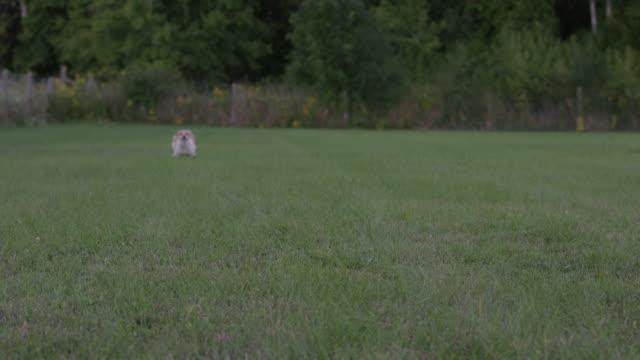 feeling free - jack russell terrier stock videos & royalty-free footage