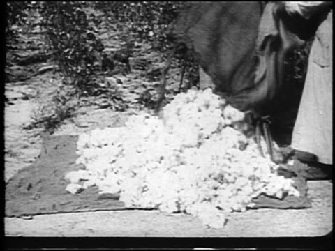 b/w 1920 feet of sharecropper women dumping sacks of cotton onto blanket outdoors / doc. - anno 1920 video stock e b–roll