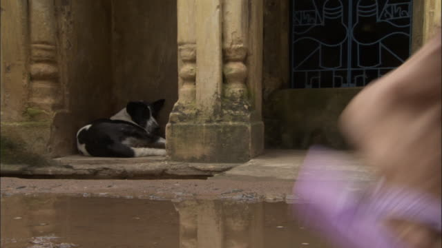 feet walk past dog lying in alleyway. available in hd. - puddle stock videos & royalty-free footage
