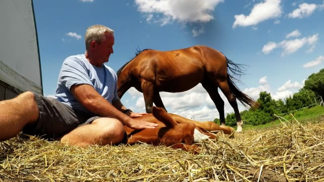 felix is a three week old foal who lives on a beautiful farm near peterborough ontario he was born in the early hours on a sunny morning to a very... - working animals stock videos & royalty-free footage
