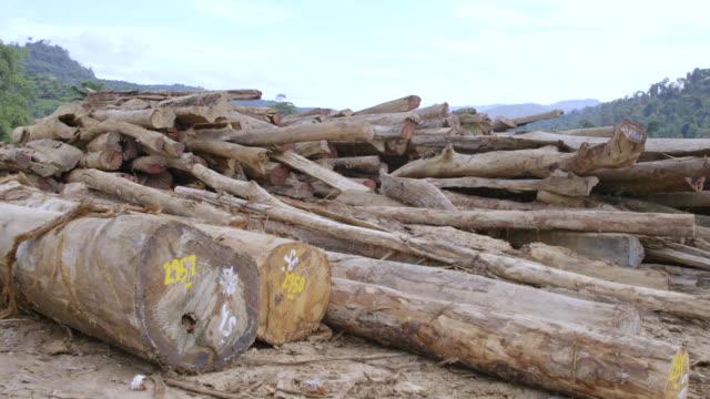 MS PAN Felled logs / Tawau, Sabah, Malaysia
