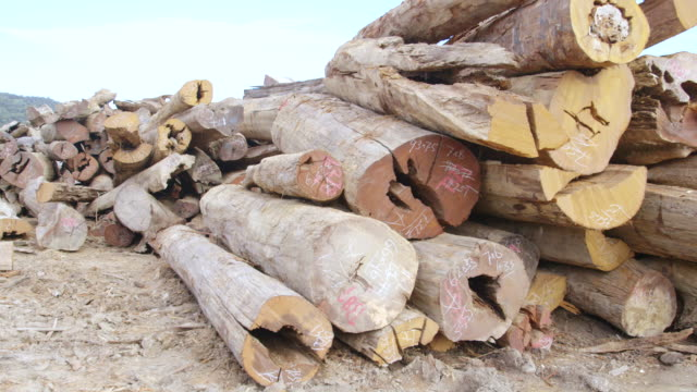 cu pan felled rainforest timber / tawau, sabah, malaysia - sabah state stock videos and b-roll footage
