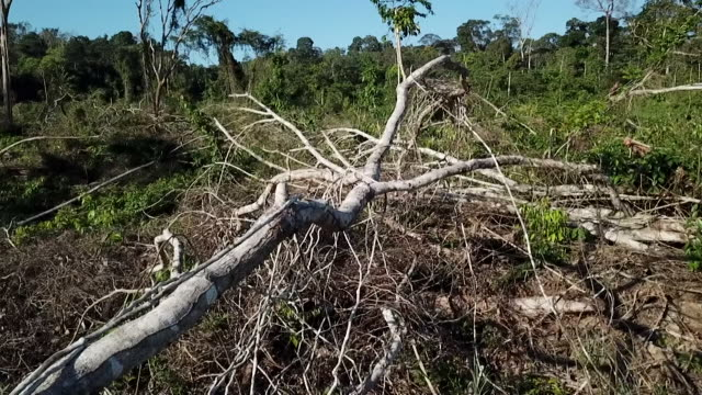 felled tree in area of deforestation in the amazon rainforest brazil - land stock videos & royalty-free footage