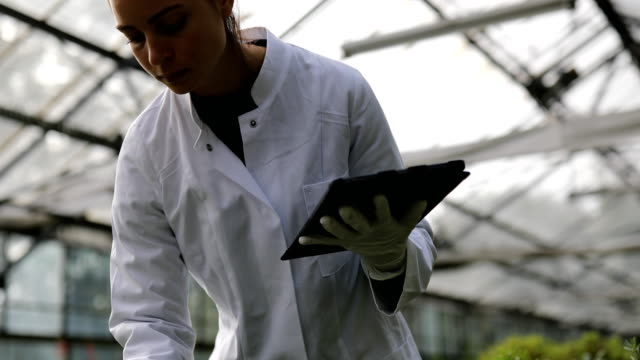 female agricultural engineer in greenhouse - seedling stock videos & royalty-free footage