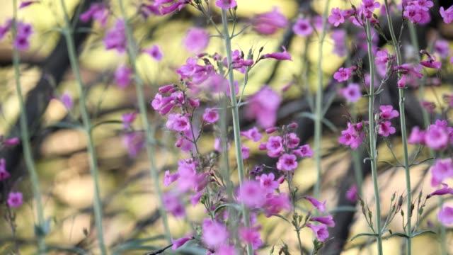 vídeos de stock e filmes b-roll de female anna's hummingbird - beija flor