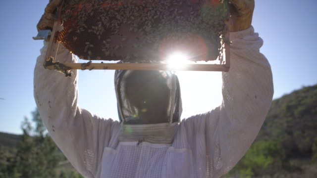CU Female beekeeper holding up a honeycomb and looking at the bees