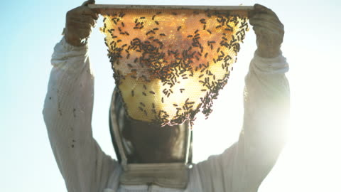 cu female beekeeper holding up a piece of honeycomb i - organic farm stock videos & royalty-free footage
