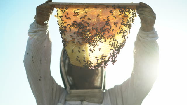 cu female beekeeper holding up a piece of honeycomb i - 農林水産関係の職業点の映像素材/bロール
