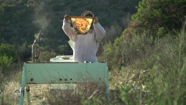 stockvideo's en b-roll-footage met ws female beekeeper looking at a piece of honeycomb - honingbij