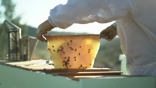 vidéos et rushes de cu tu female beekeeper looking at bees crawling on a honeycomb - abeille