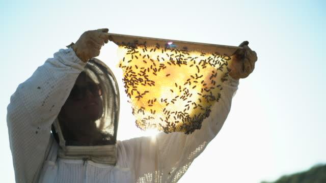 stockvideo's en b-roll-footage met cu female beekeeper looking at bees in a hive. - honingbij