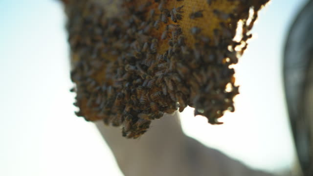 vidéos et rushes de cu female beekeeper looking at bees in a hive - miel