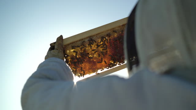 rv cu female beekeeper looking at bees - pollination stock videos & royalty-free footage