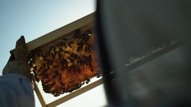ecu rv female beekeeper looking at bees - beehive stock videos & royalty-free footage
