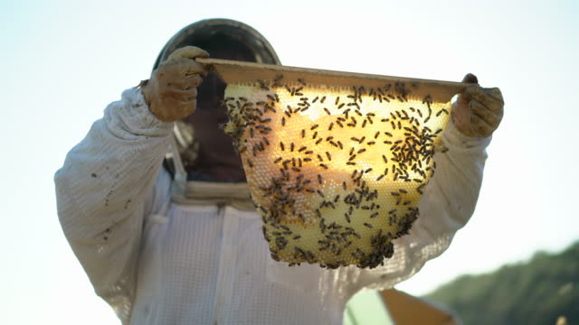 cu female beekeeper looking at bees - beehive stock videos & royalty-free footage