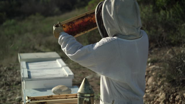 rv cu female beekeeper looking at her beehive - organic farm stock videos & royalty-free footage