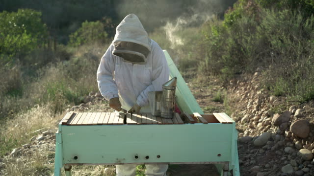 MS Female beekeeper taking care of her apiary