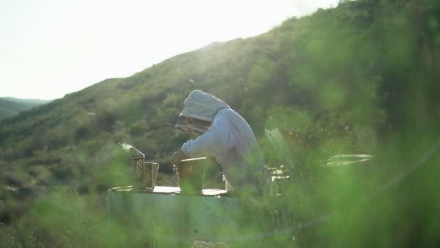 WS Female beekeeper taking care of her apiary