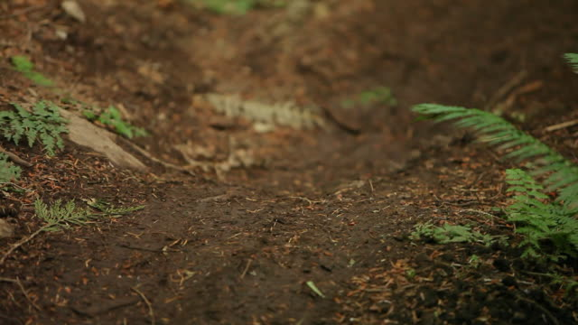 MS TU Female biker mountain biking through forest / Squamish, British Columbia, Canada
