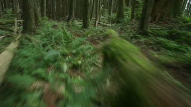 WS POV Female biker mountain biking through forest / Squamish, British Columbia, Canada