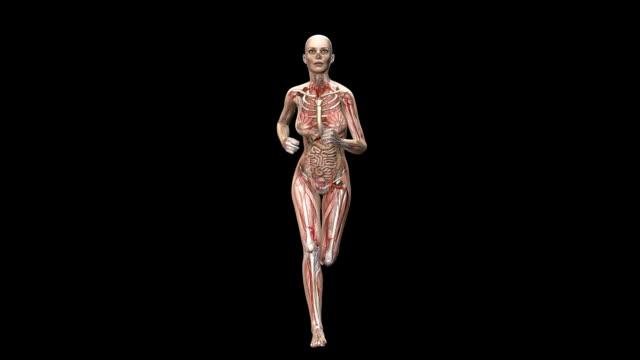 female body running - intestino crasso umano video stock e b–roll