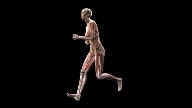 female body running - human large intestine stock videos & royalty-free footage