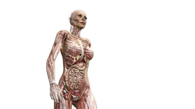 female body walking - human large intestine stock videos & royalty-free footage