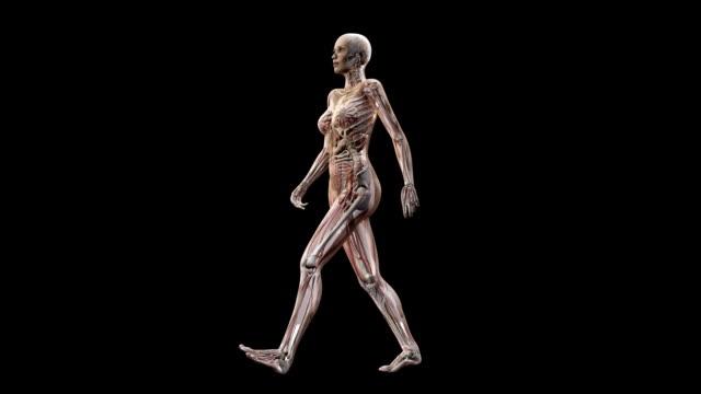 vidéos et rushes de female body walking - illustration biomédicale
