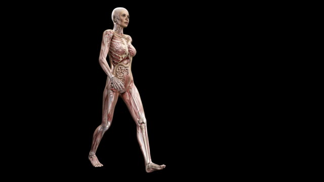 Female body walking