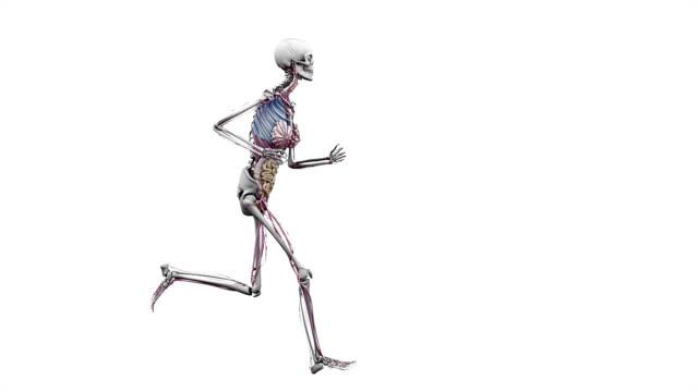 """vidéos et rushes de """"female body with organs, running"""" - représentation féminine"""