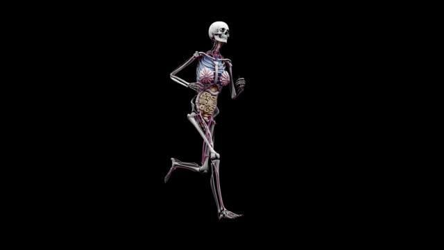 """""""female body with organs, running"""" - weibliche figur stock-videos und b-roll-filmmaterial"""