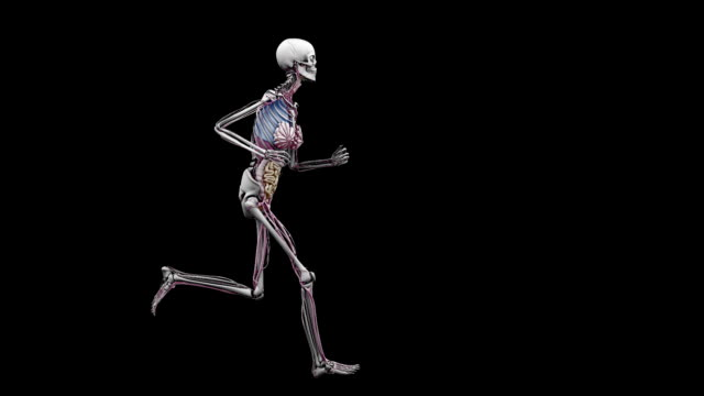 'Female body with organs, running'