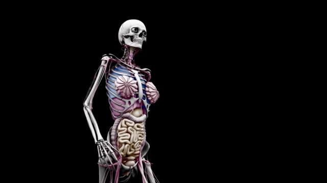 """""""female body with organs, walking"""" - 人の腸点の映像素材/bロール"""