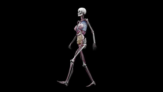 """female body with organs, walking"" - human large intestine stock videos & royalty-free footage"