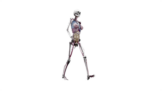 """""""female body with organs, walking"""" - biomedical illustration stock videos & royalty-free footage"""