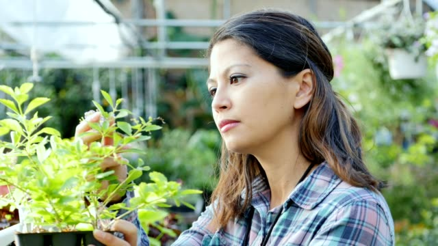 Female botanist examines the health of a plant