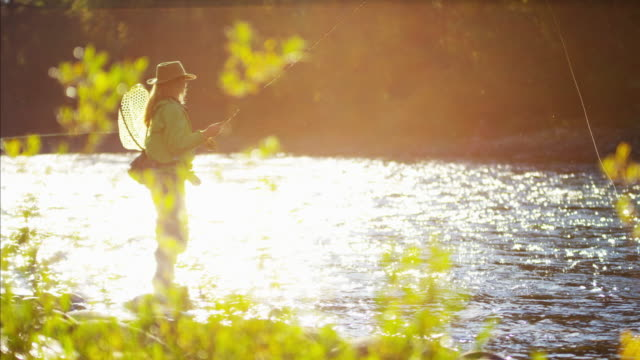 female casting line in freshwater river sunrise usa - freshwater fish stock videos & royalty-free footage