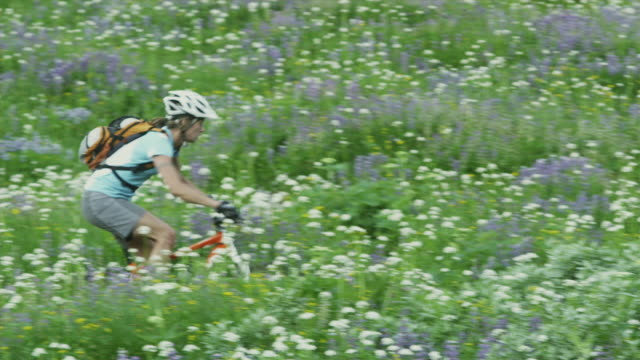 MS TS Female cyclist crossing flowering meadow, Coast Mountains, Squamish, British Columbia, Canada