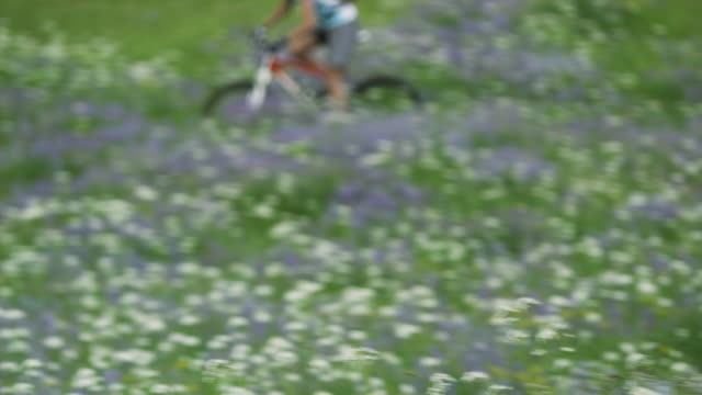 MS TS DEFOCUS Female cyclist crossing flowering meadow, Coast Mountains, Squamish, British Columbia, Canada