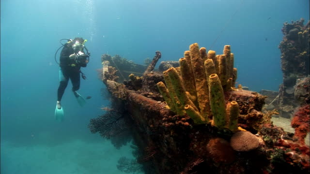 ms, female diver filming shipwreck, saint lucia - shipwreck stock videos and b-roll footage