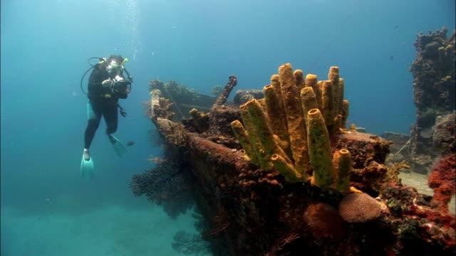 stockvideo's en b-roll-footage met ms, female diver filming shipwreck, saint lucia - scheepswrak