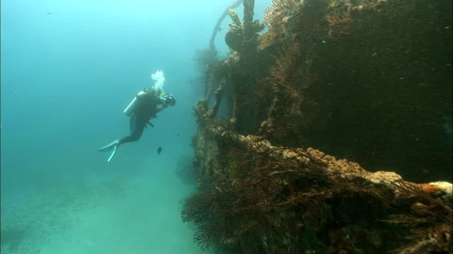 ms, female diver filming shipwreck, saint lucia - ancient stock videos & royalty-free footage