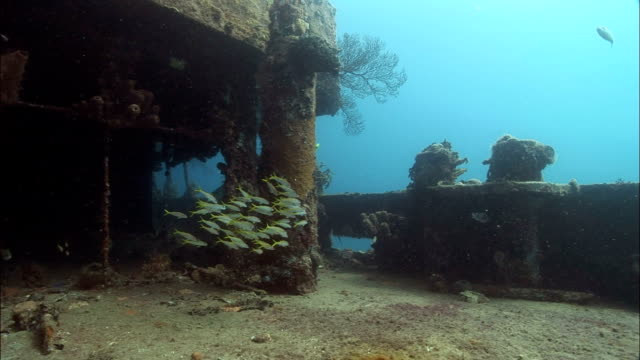 ms, female diver swimming around shipwreck covered with corals, saint lucia - old diving suit stock videos and b-roll footage