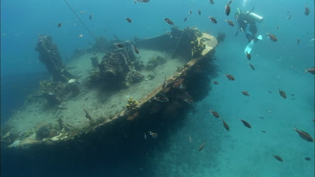 ws, ha, female diver swimming around shipwreck covered with corals, saint lucia - old diving suit stock videos and b-roll footage