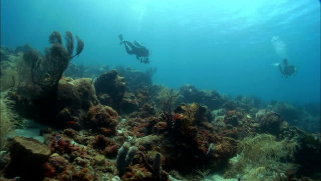 ws, female diver swimming over coral reef, saint lucia - seabed stock videos & royalty-free footage