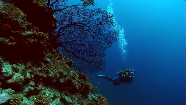 ws, female diver with camera moving around coral reef, saint lucia - st lucia stock videos & royalty-free footage