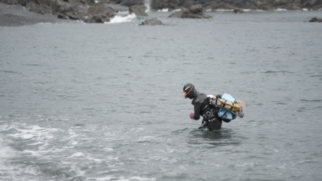 female divers bring their catch to shore, japan - mollusk stock videos & royalty-free footage
