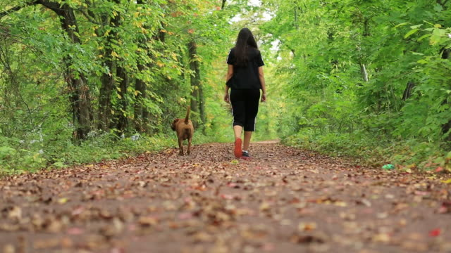 female dog walker - dog walker stock videos and b-roll footage