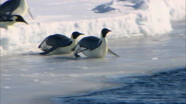 female emperor penguins sliding into the sea - 滑る点の映像素材/bロール